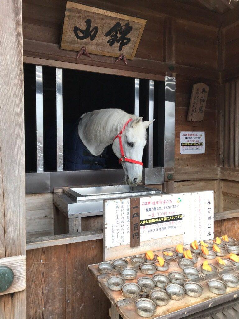 多度大社の神馬舎の白い馬「錦山」号